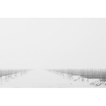 The Morning Mist 1